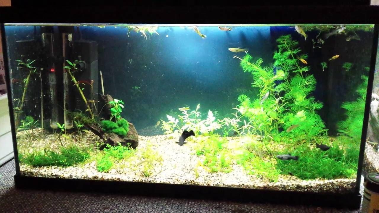 Aandachtspunten voor het houden van een aquarium 2