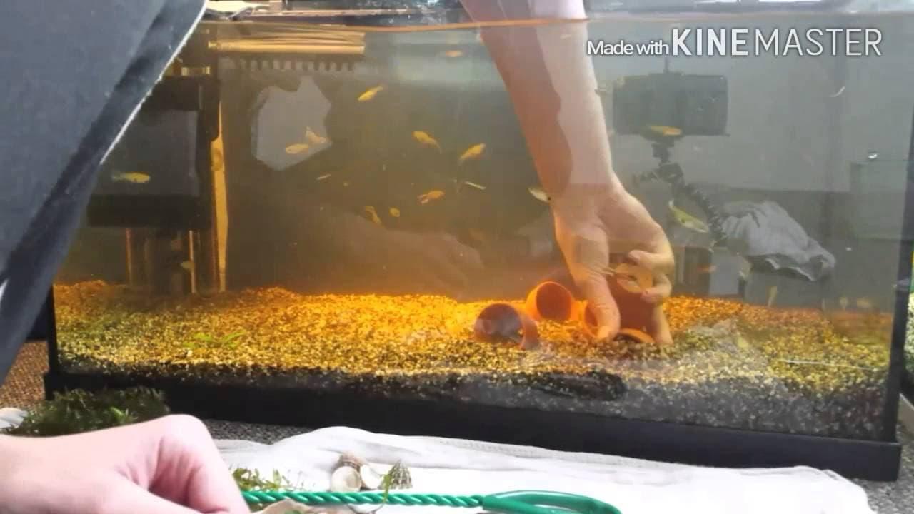 Aquarium opnieuw inrichten 5