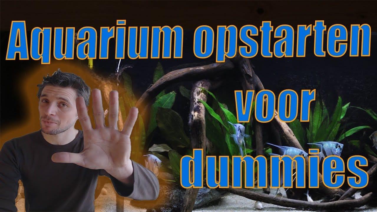 Aquarium opstarten voor dummies 1