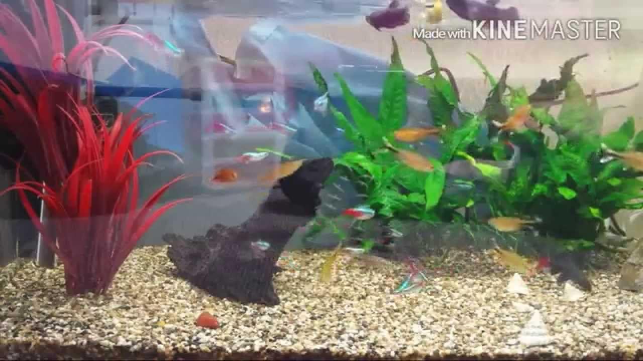 Diy achtergrond aquarium 6