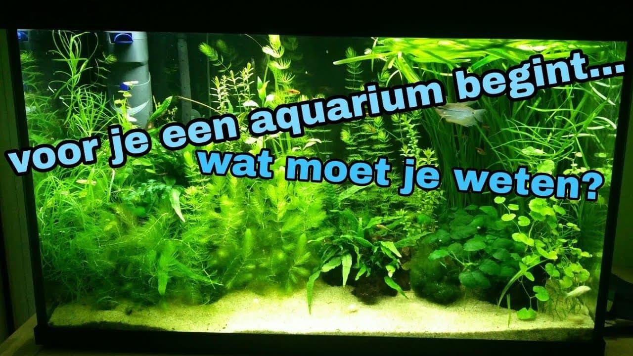 Een aquarium beginnen, wat moet je weten? 1