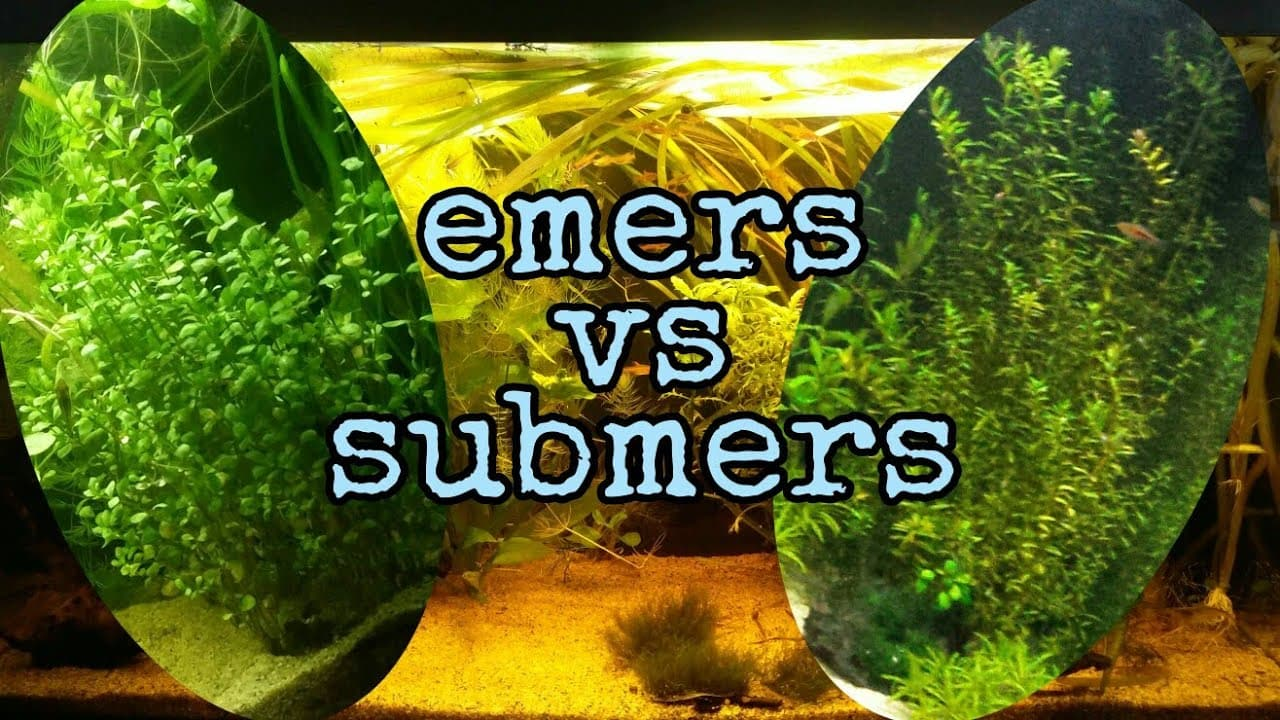 Emers vs submers 1