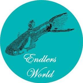 Endlers World