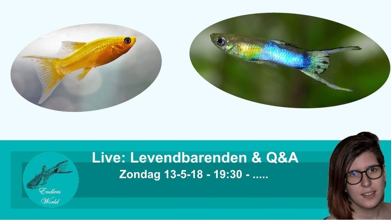 Levendbarende (live) 6