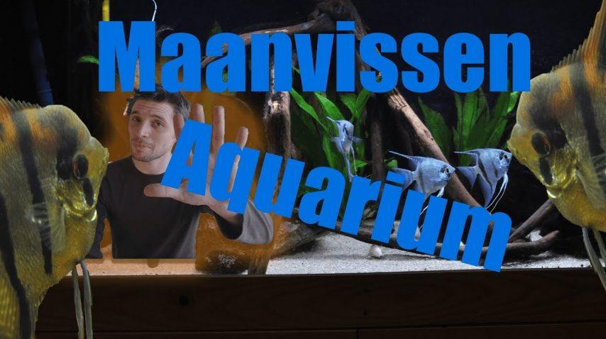 Maanvissen huisvesten 9