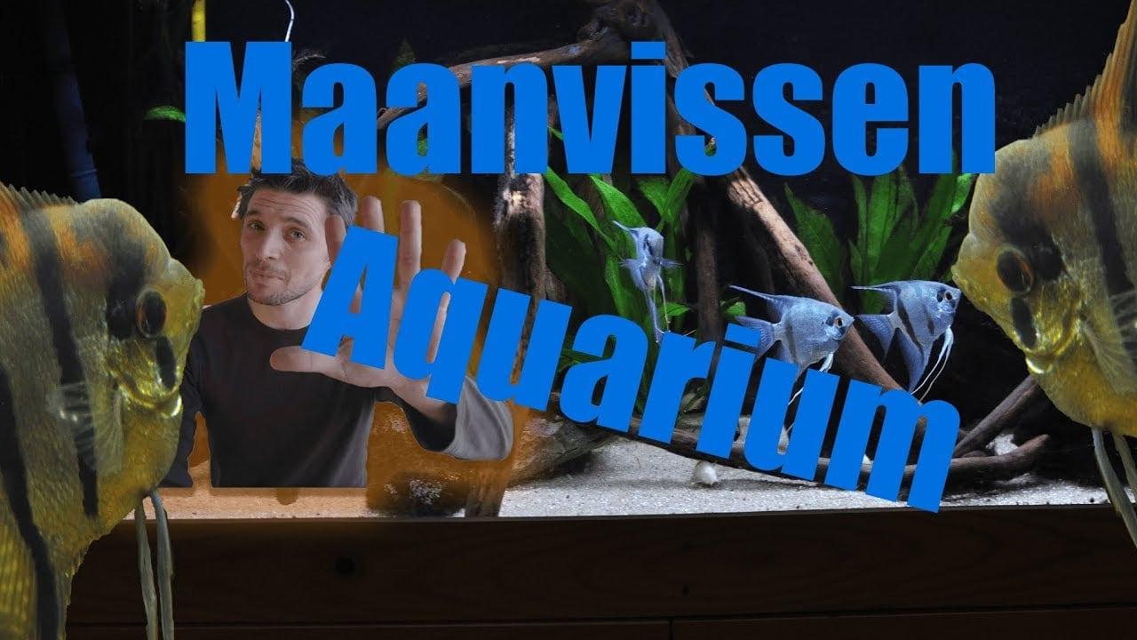 Beste huisvesting voor maanvissen 1