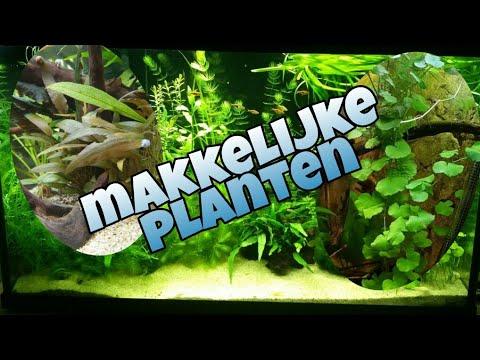 Makkelijke aquarium planten voor beginners 3