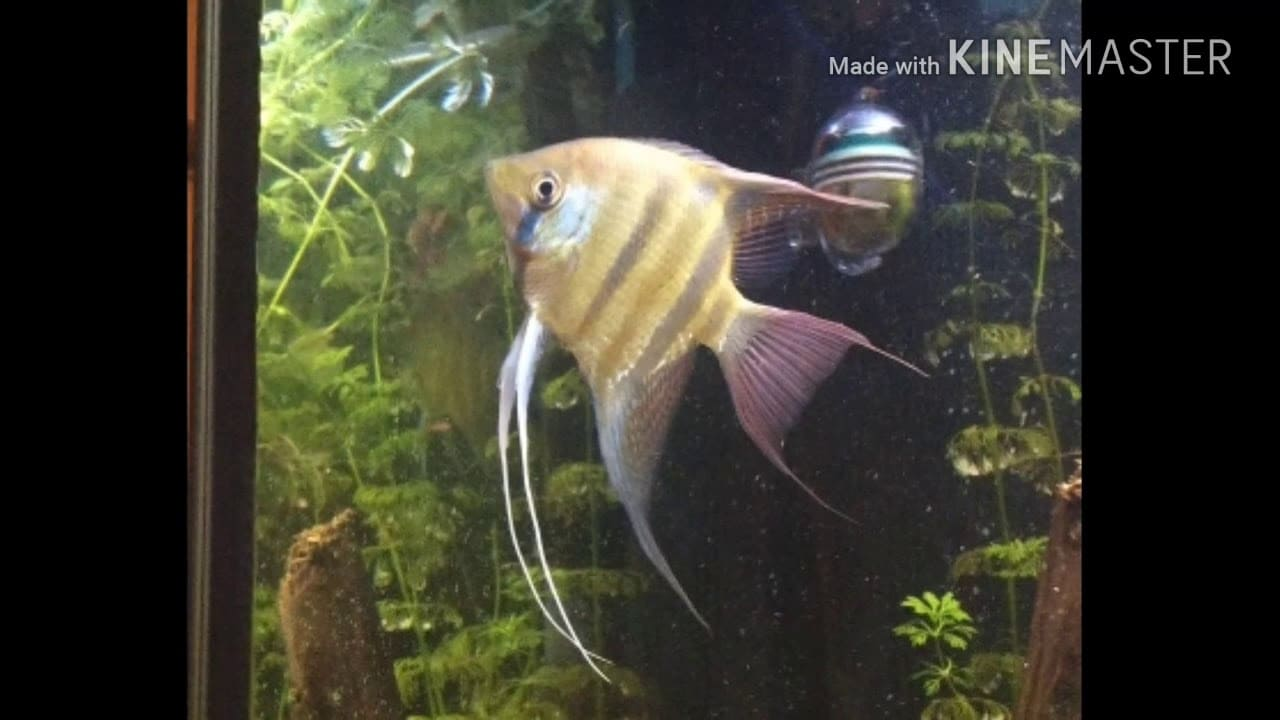 Mijn maanvis aquarium 2