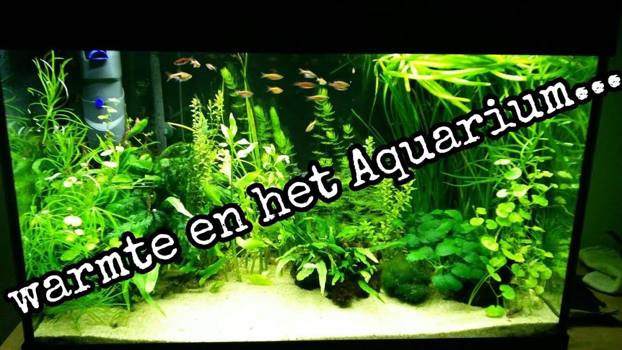 Warmte en aquaria 4