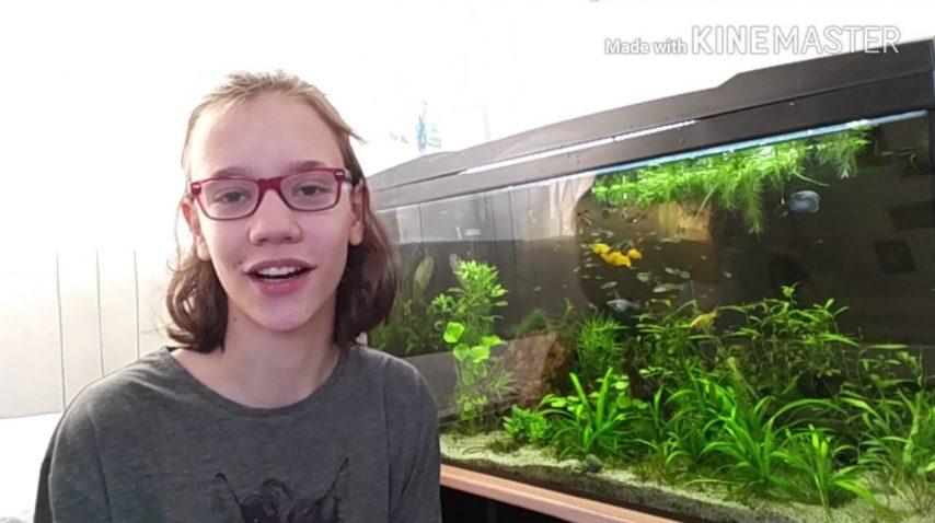 Wat voer ik mijn vissen? 27