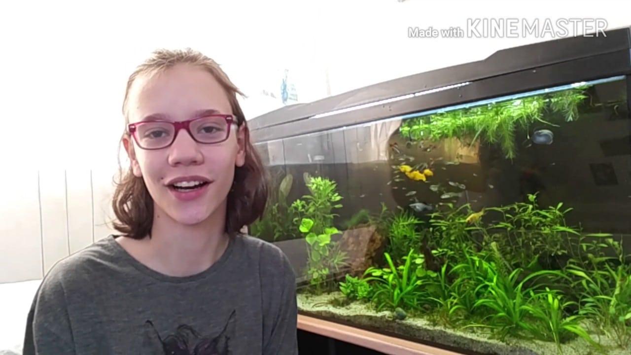 Wat voer ik mijn vissen? 4
