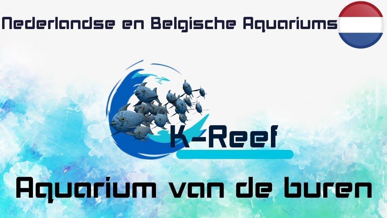 Zeewater aquarium van de buren 4