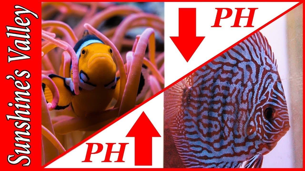 PH in het aquarium verlagen of verhogen 1