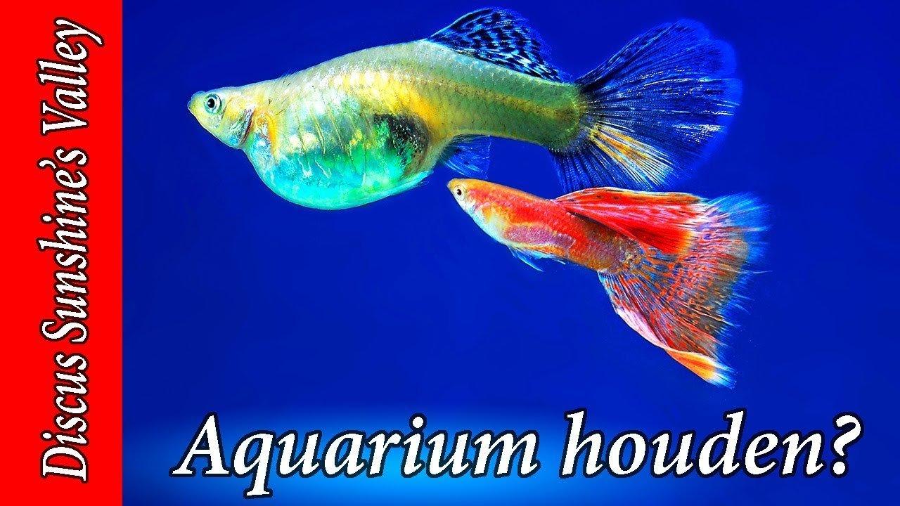 Waarom mijn hobby aquarium houden is? 24