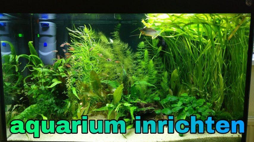 Beplant aquarium inrichten 28