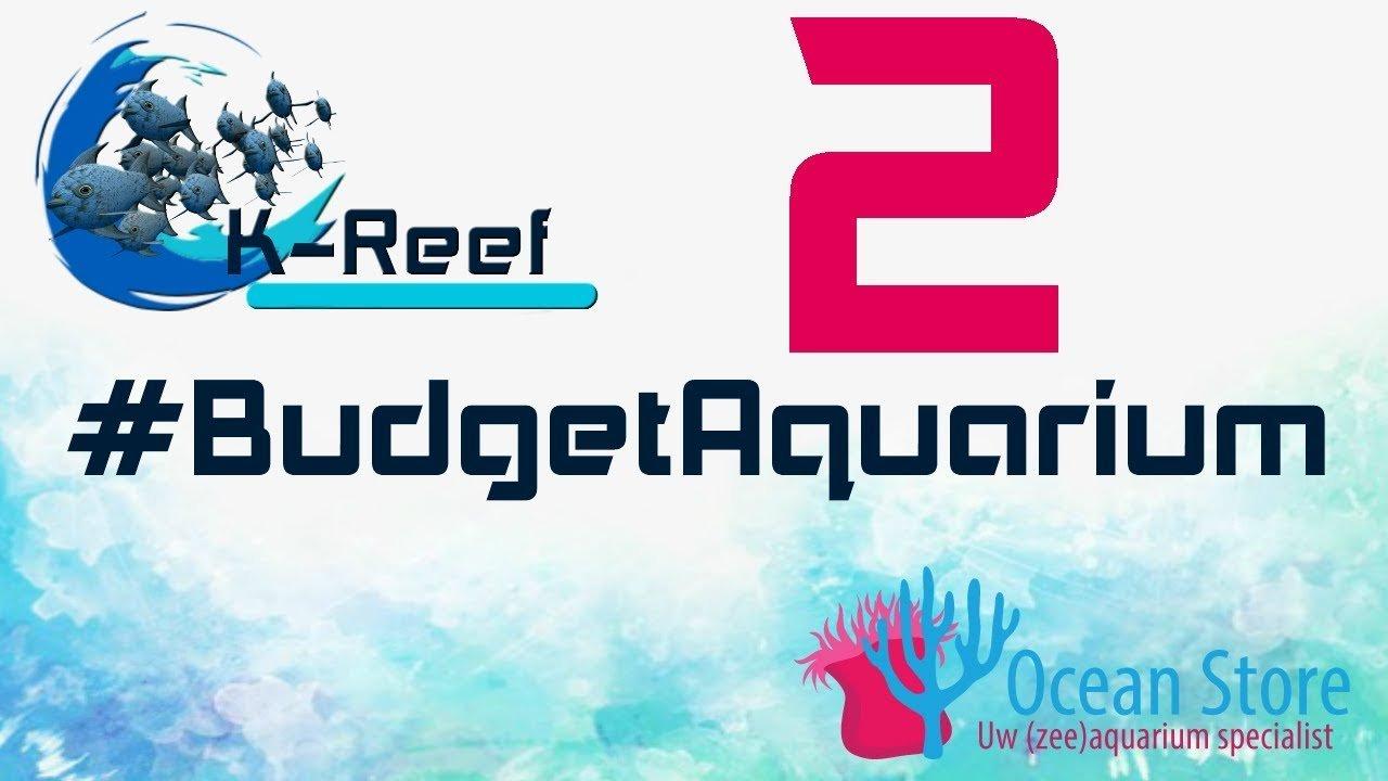 Budget zeeaquarium aflevering 2 2
