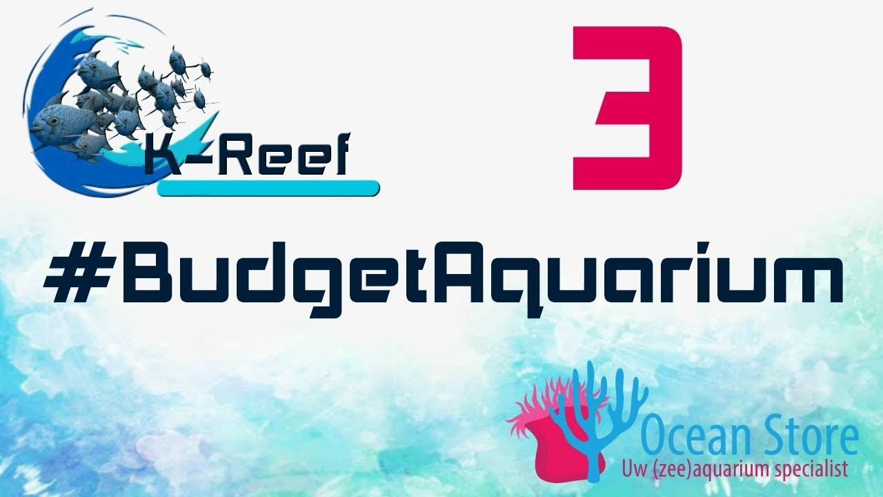 Budget zeeaquarium aflevering 3 6