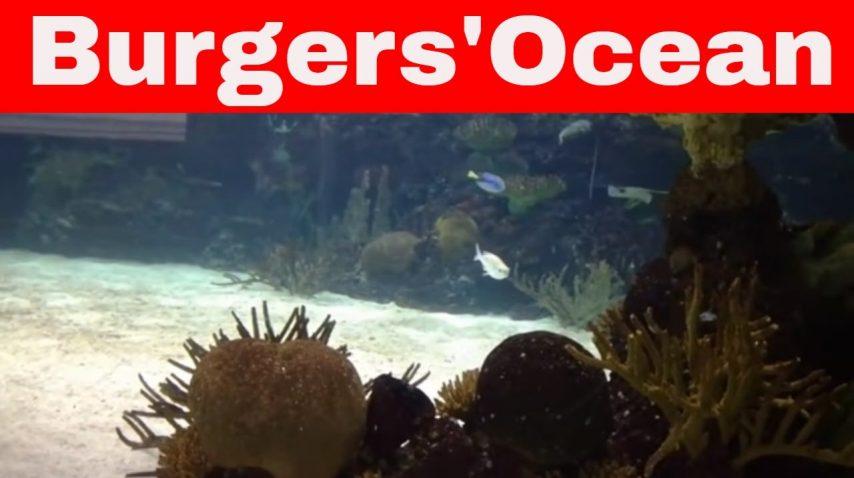 Burgers Zoo Ocean 12