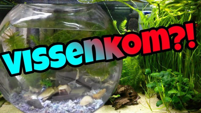Vissenkom 1