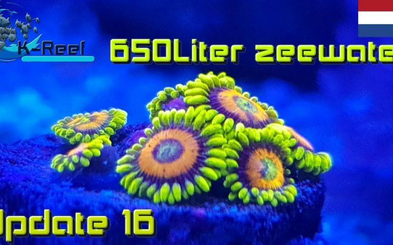 650 liter zeewater aquarium 10