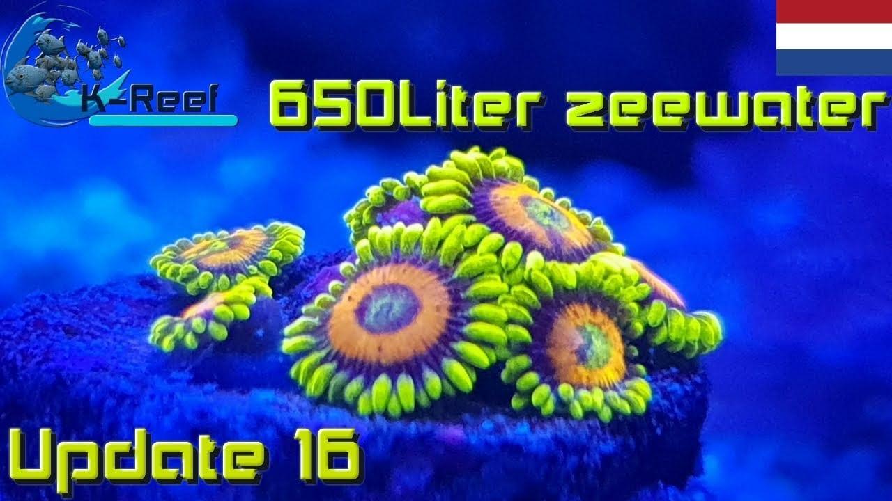 650 liter zeewater aquarium 3