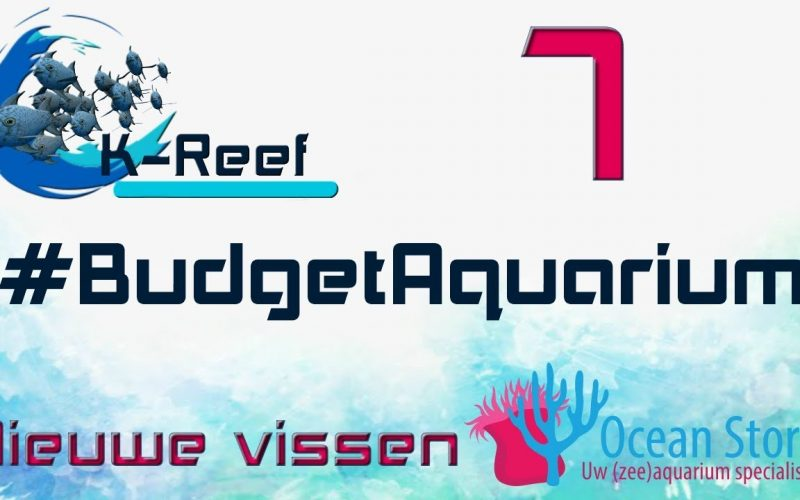 Budget aquarium aflevering 7 2
