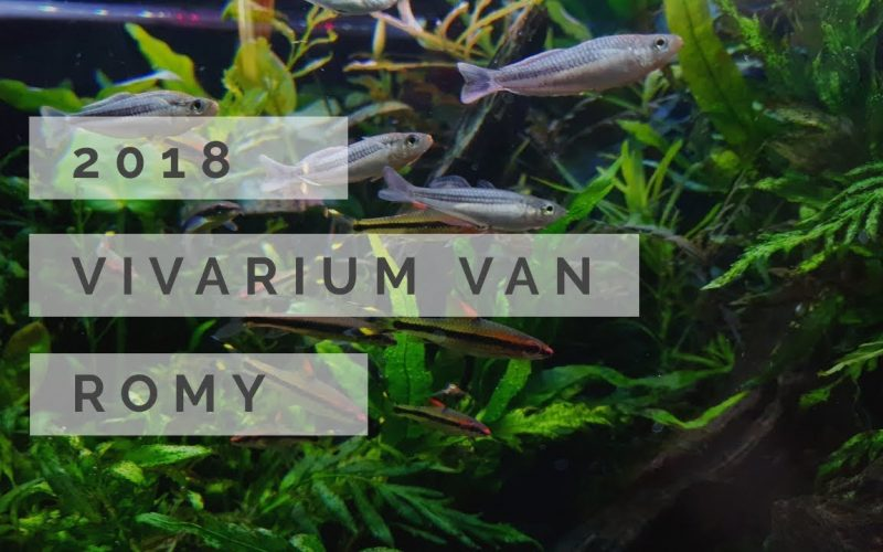 Vivarium 2018 1