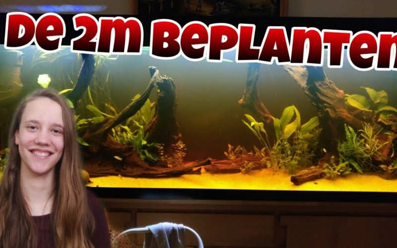200cm aquarium beplanten 9