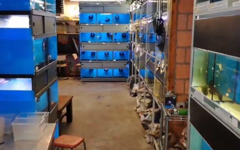 Aquariumgek Oosterhout 11
