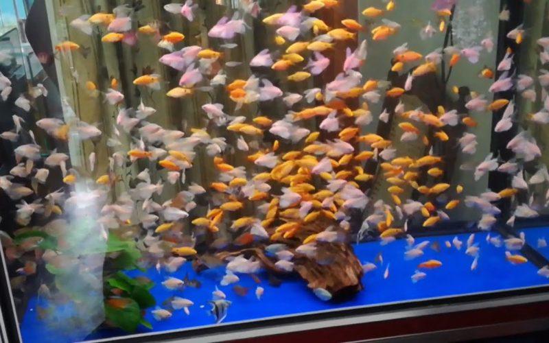 Aquariumspeciaalzaak Sri Lanka 1