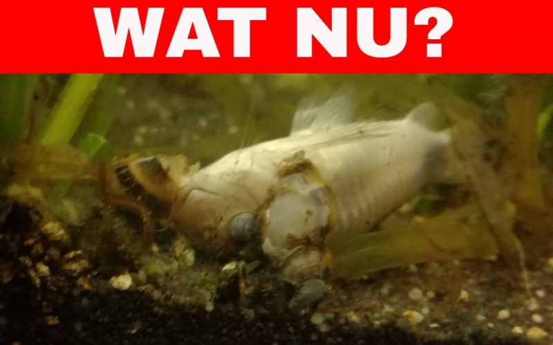 Dode vis in het aquarium 20