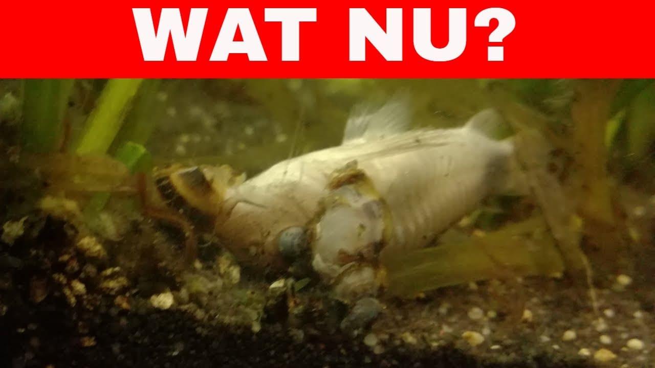 Dode vis in het aquarium 7