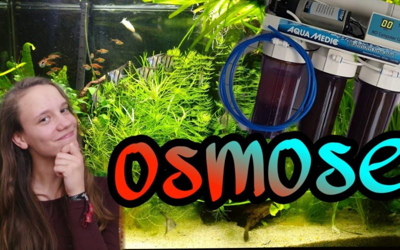 Osmose water in een aquarium 19