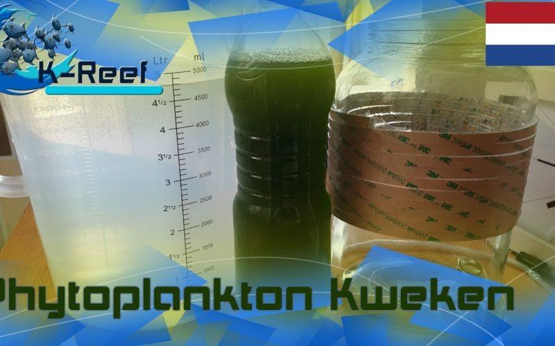 Phytoplankton kweken 7