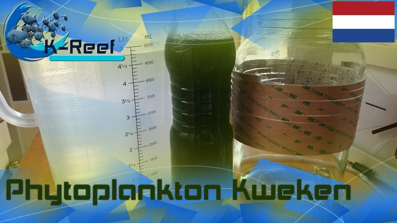 Phytoplankton kweken 4