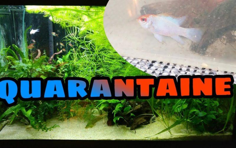 Quarantaine bij vissen 16
