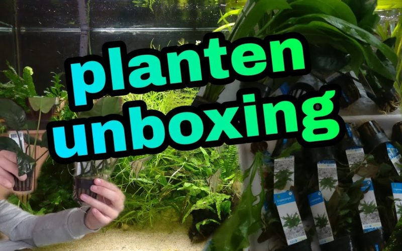 Unboxing grote aquariumplanten 3