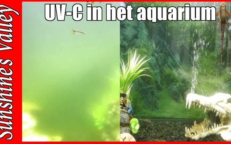 UV-C lampen 1