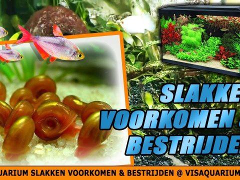 Aquarium slakken 2