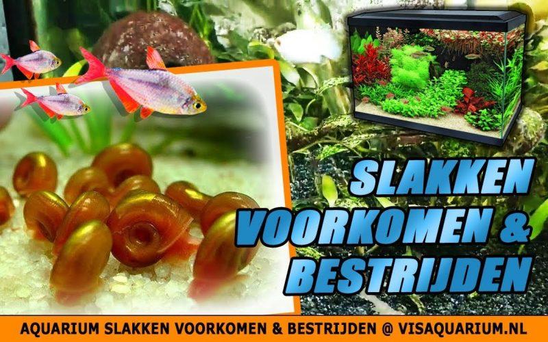 Aquarium slakken 1