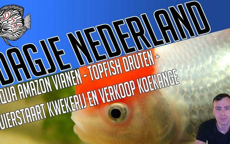 Aquariumspeciaalzaken Nederland 1
