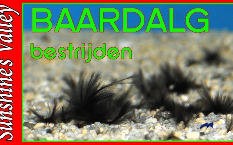 Baardalg 3