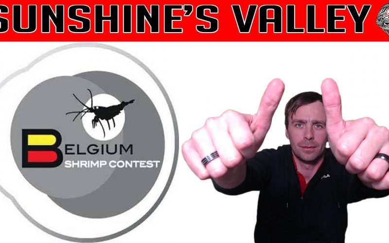 Belgium Shrimp Contest 2018 1