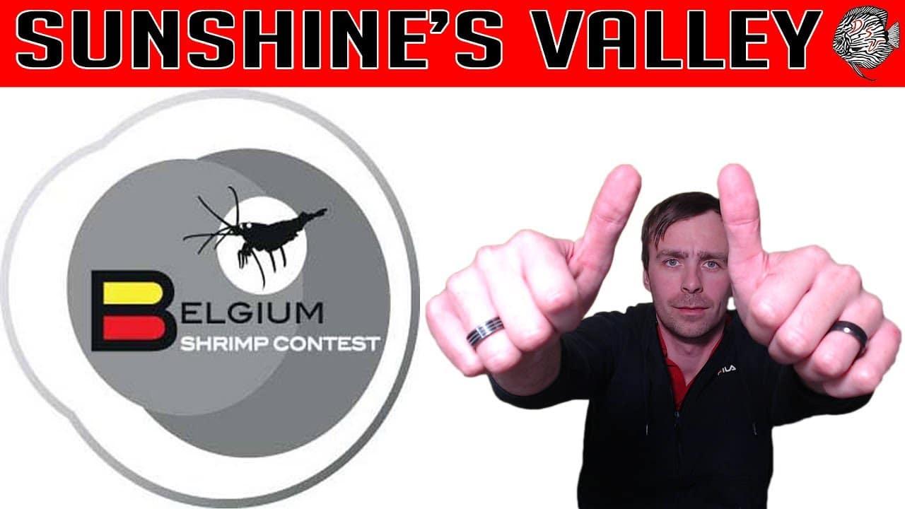 Belgium Shrimp Contest 2018 9