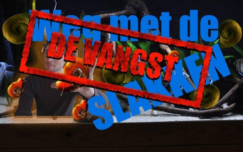 De slakken vangst 13