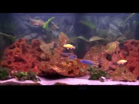 Nieuw aquarium 4