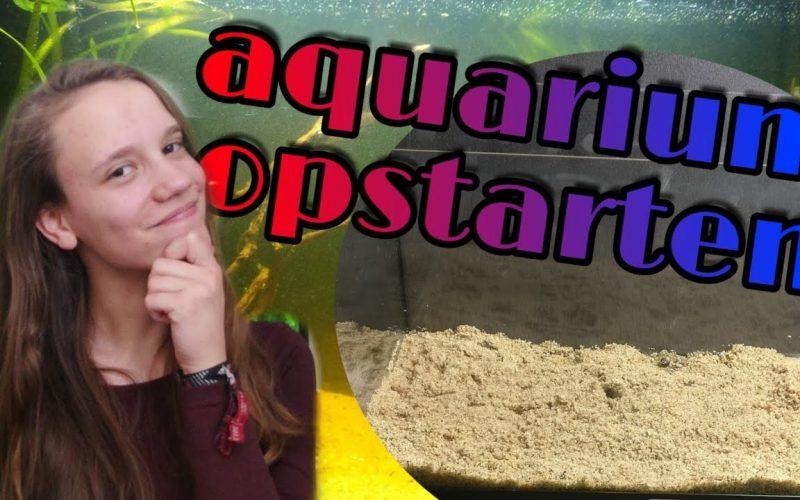 Een nieuw aquarium opstarten 27