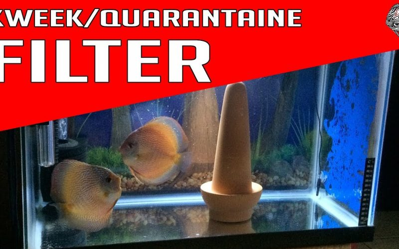 Het ideale aquarium filter 27