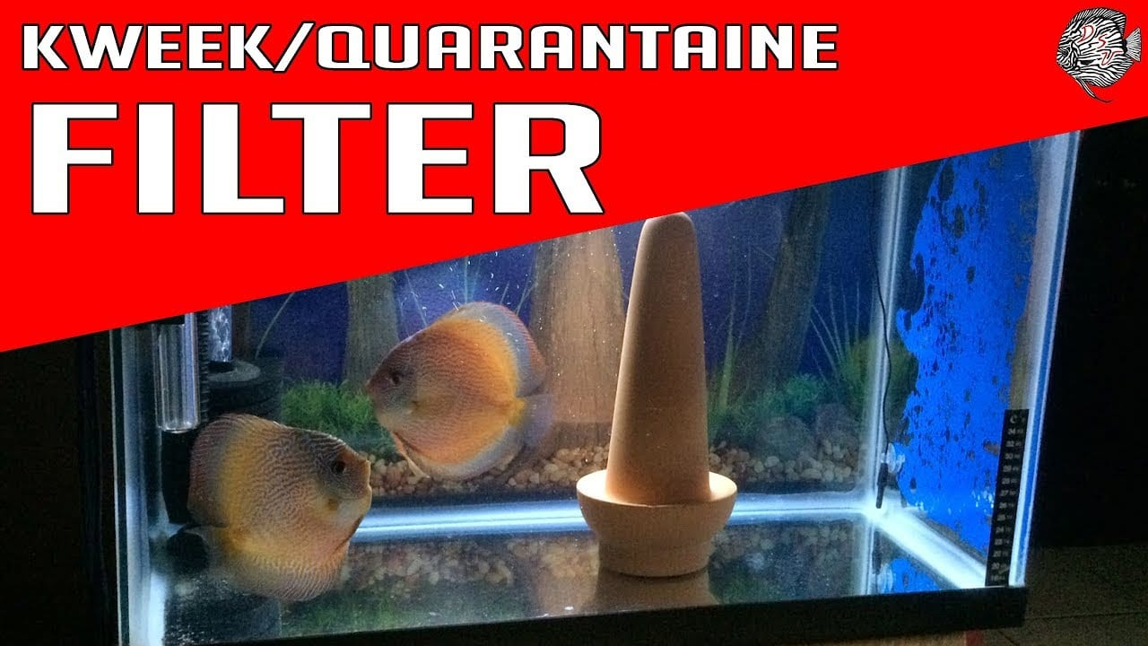 Het ideale aquarium filter 8