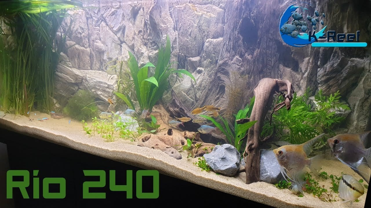 Juwel Rio 240 zoetwater 3